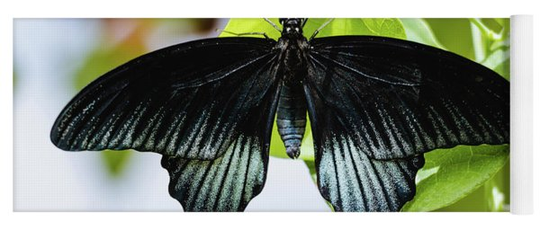 Yoga Mat featuring the photograph Black Butterfly - Papilio Ascalaphus by Cristina Stefan
