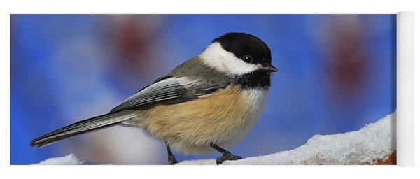 Black-capped Chickadee In Sumac Yoga Mat