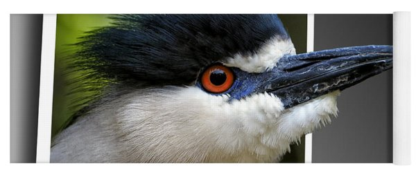 Black Crowned Night Heron Out Of Bounds Yoga Mat