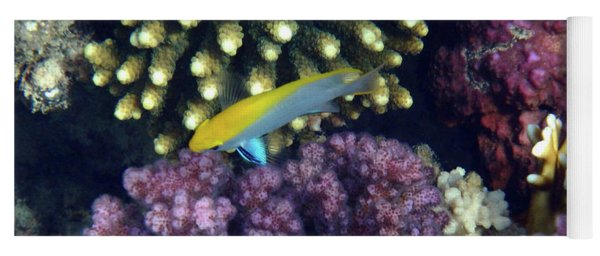 Black Damselfish Juvenile Red Sea Yoga Mat