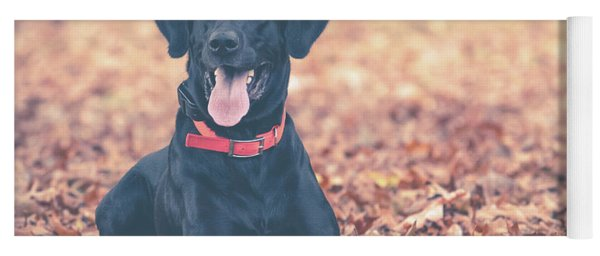 Black Labrador In The Fall Leaves Yoga Mat