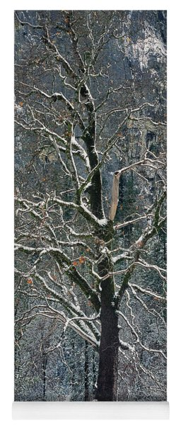 Yoga Mat featuring the photograph Black Oak Quercus Kelloggii With Dusting Of Snow by Dave Welling
