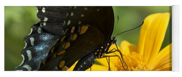 Black Swallowtail Drinking Yoga Mat