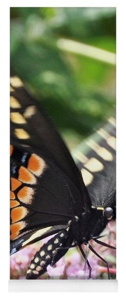 Black Swallowtail Butterfly On Pink Yoga Mat