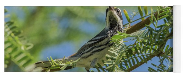Black-throated Gray Warbler 5771-092217-1cr Yoga Mat