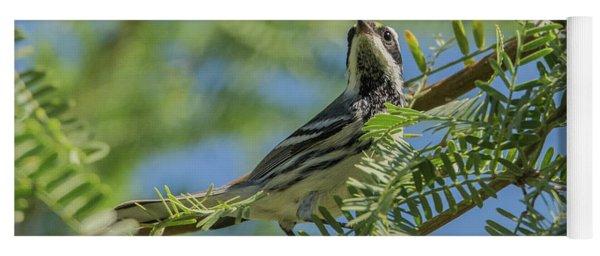 Black-throated Gray Warbler 5771-092217-1cr Yoga Mat