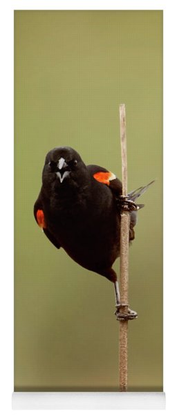 Blackbird Yoga Mat