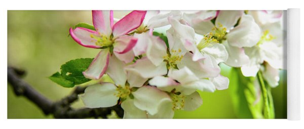 Blooming -apples Blossoms  Yoga Mat