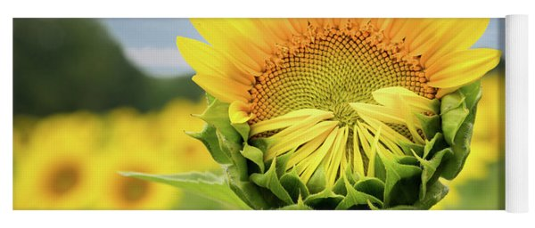 Blooming Sunflower Yoga Mat