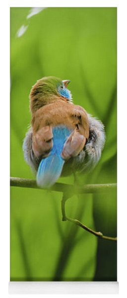 Yoga Mat featuring the photograph Blue Bird Has An Itch by Raphael Lopez