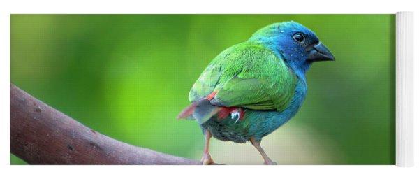 Blue-faced Parrotfinch Yoga Mat