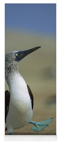 Blue-footed Booby Sula Nebouxii Yoga Mat
