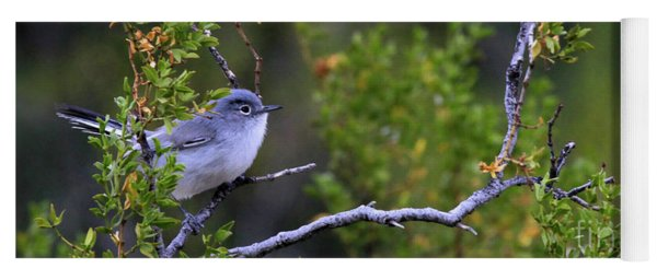 Blue-gray Gnatcatcher  Yoga Mat