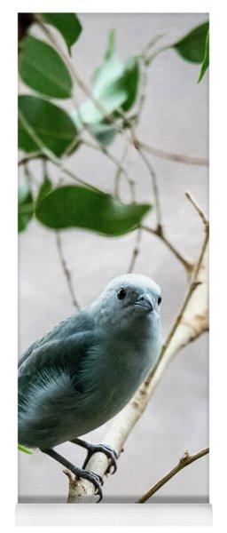 Blue-grey Tanager 2 Yoga Mat