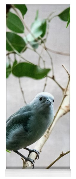 Blue-grey Tanager 2 Yoga Mat