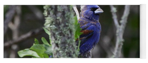 Blue Grosbeak In A Mangrove Yoga Mat