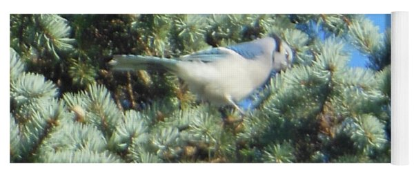 Yoga Mat featuring the photograph Blue Jay Colorado Spruce by Rockin Docks Deluxephotos