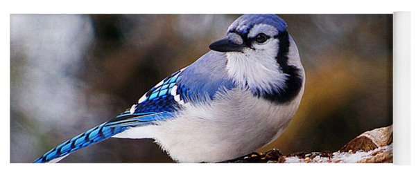 Blue Jay Day Yoga Mat