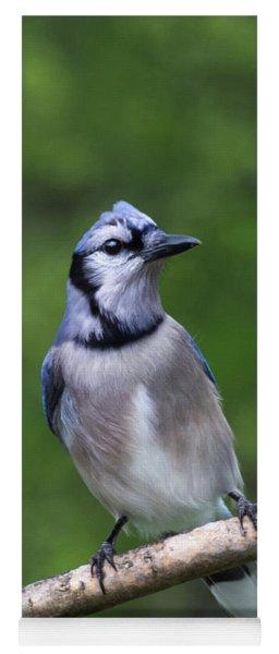 Blue Jay On Alert Yoga Mat