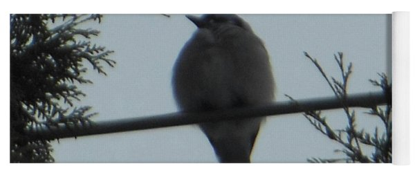 Blue Jay On Wire Yoga Mat