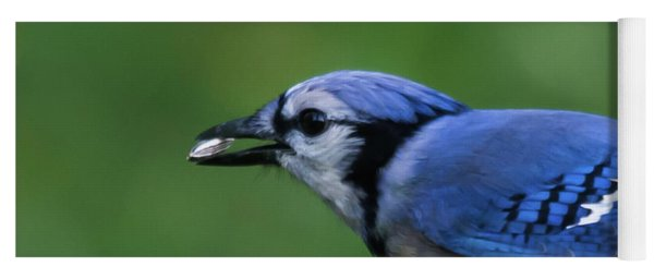 Blue Jay With Seed Yoga Mat
