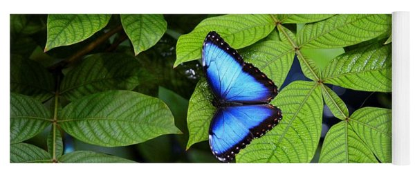 Blue Leaves - Morpho Butterfly Yoga Mat
