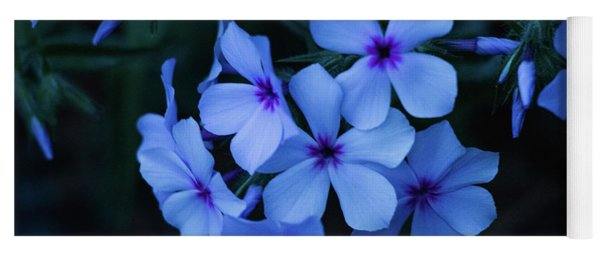 Yoga Mat featuring the photograph Blue Moon Phlox by Cristina Stefan