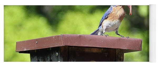 Bluebird Breakfast Feeding Yoga Mat