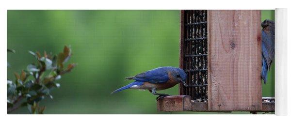 Bluebird Couple Sharing The Feeder Yoga Mat