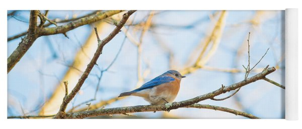 Bluebird In Tree Yoga Mat