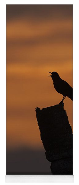 Boat-tailed Grackle At Sunset Yoga Mat