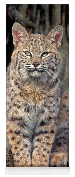 Bobcat Felis Rufus Captive Yoga Mat