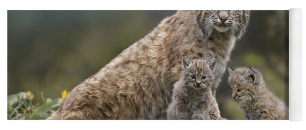Bobcat Mother And Kittens North America Yoga Mat