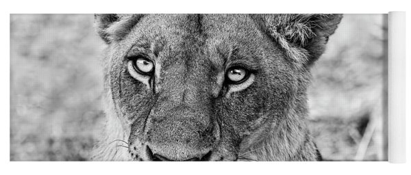 Botswana  Lioness In Black And White Yoga Mat