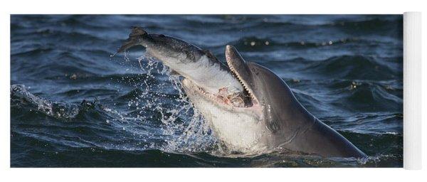 Bottlenose Dolphin Eating A Salmon - Scotland #5 Yoga Mat