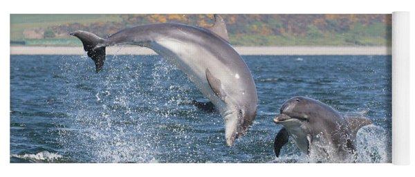 Yoga Mat featuring the photograph Bottlenose Dolphin - Moray Firth Scotland #49 by Karen Van Der Zijden