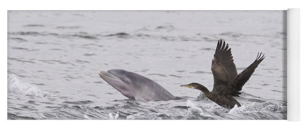 Baby Bottlenose Dolphin - Scotland #10 Yoga Mat