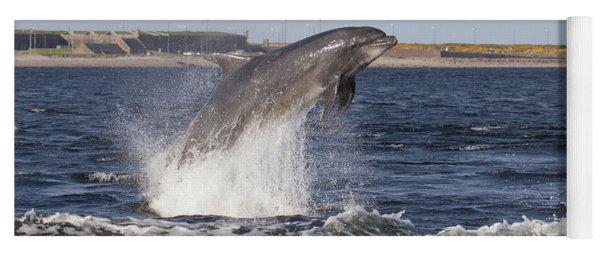 Bottlenose Dolphin - Scotland  #26 Yoga Mat