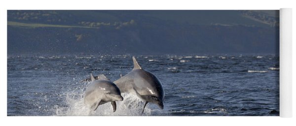 Bottlenose Dolphins Leaping - Scotland  #37 Yoga Mat