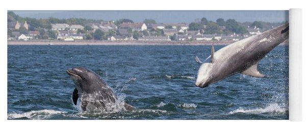 Yoga Mat featuring the photograph Bottlenose Dolphins - Moray Firth Scotland #45 by Karen Van Der Zijden