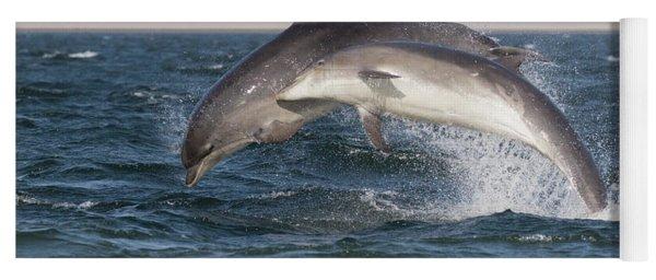 Yoga Mat featuring the photograph Bottlenose Dolphins - Moray Firth Scotland #47 by Karen Van Der Zijden