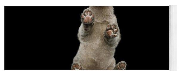 Bottom View Of Kitten Yoga Mat