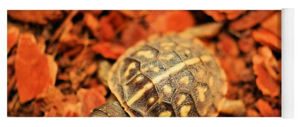 Box Turtle Yoga Mat