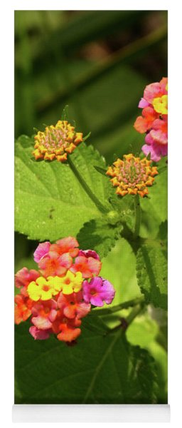 Bright Cluster Of Lantana Flowers Yoga Mat