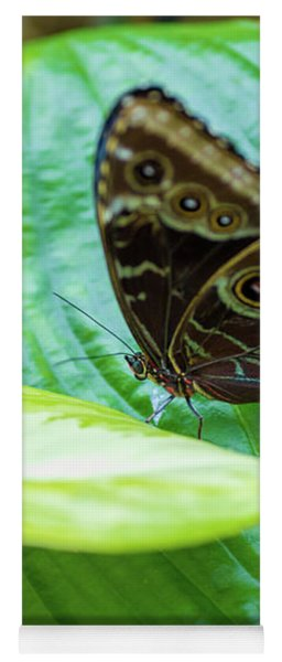 Yoga Mat featuring the photograph Brown And Blue Butterfly by Raphael Lopez