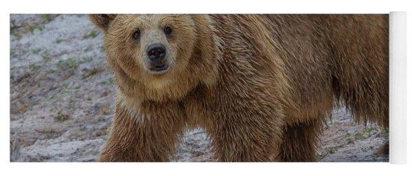 Brown Bear 3 Yoga Mat