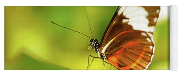 Brown Butterfly On Leaf Yoga Mat