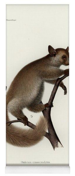 Brown Greater Galago Or Thick-tailed Bushbaby Yoga Mat