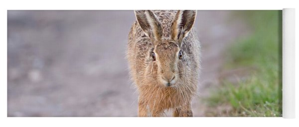 Brown Hare Approaching Down Track Yoga Mat