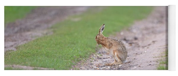 Brown Hare Cleaning Yoga Mat